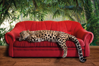 Leopard on red couch