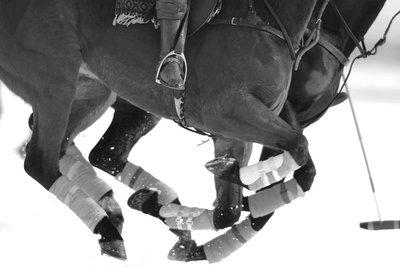 Polo horse legs