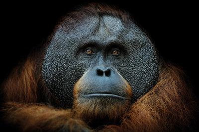 Smart Monkey I
